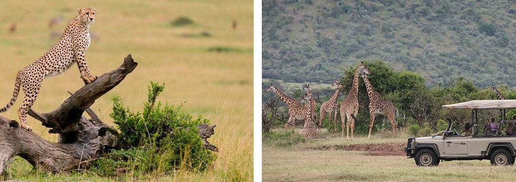 African Safari Family Adventure 2021 11