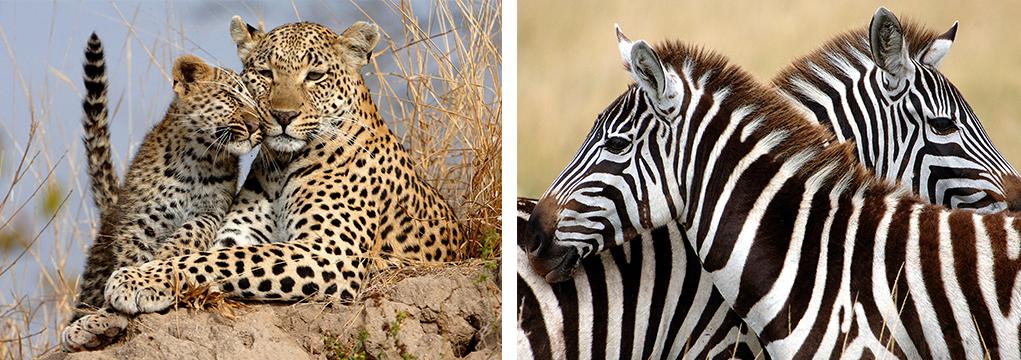 African Safari Family Adventure 2021 21