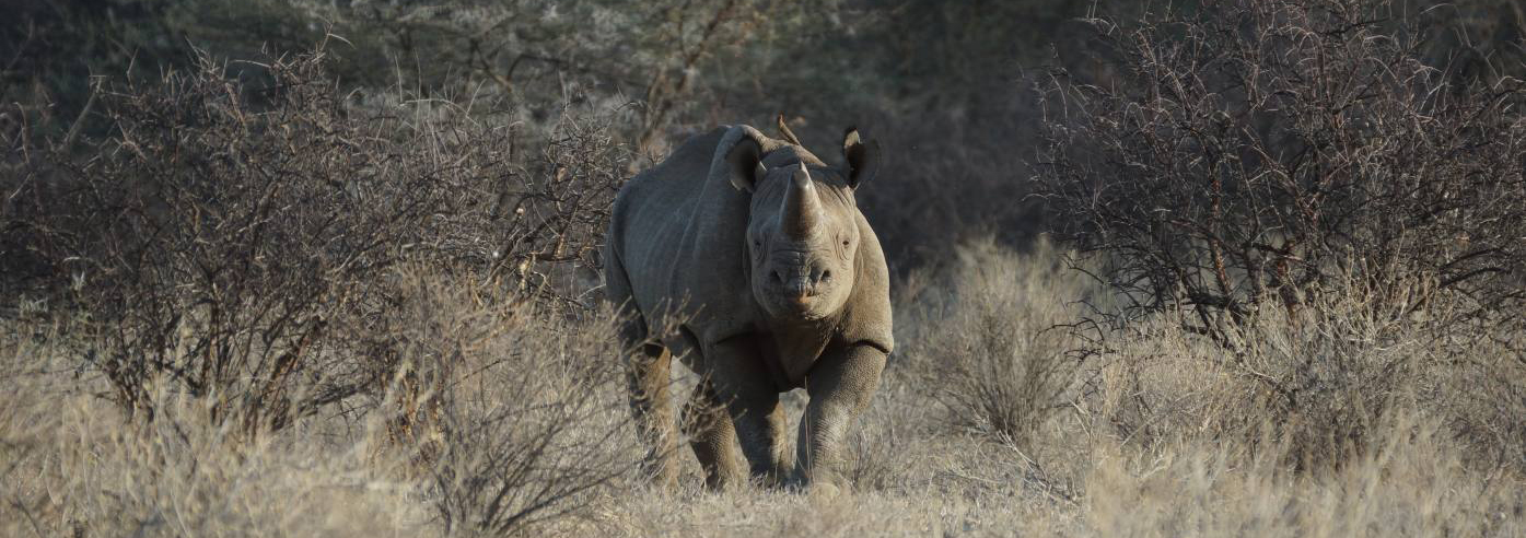 African Safari Family Adventure 2021 6