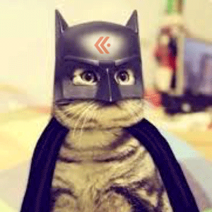 Bat_cat-300w.png