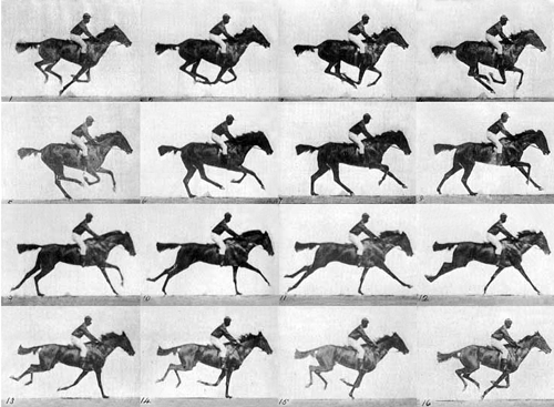Muybridge race horse