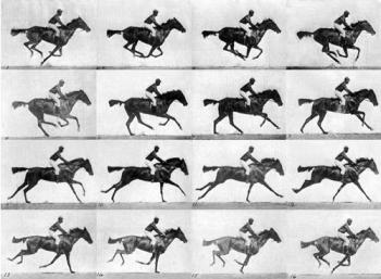 Muybridge race horse