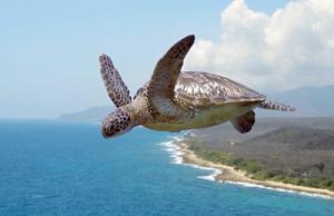 Flying_tortoise-500w.png