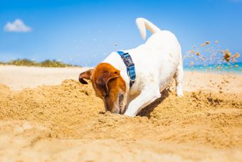 Digging_dog.jpg