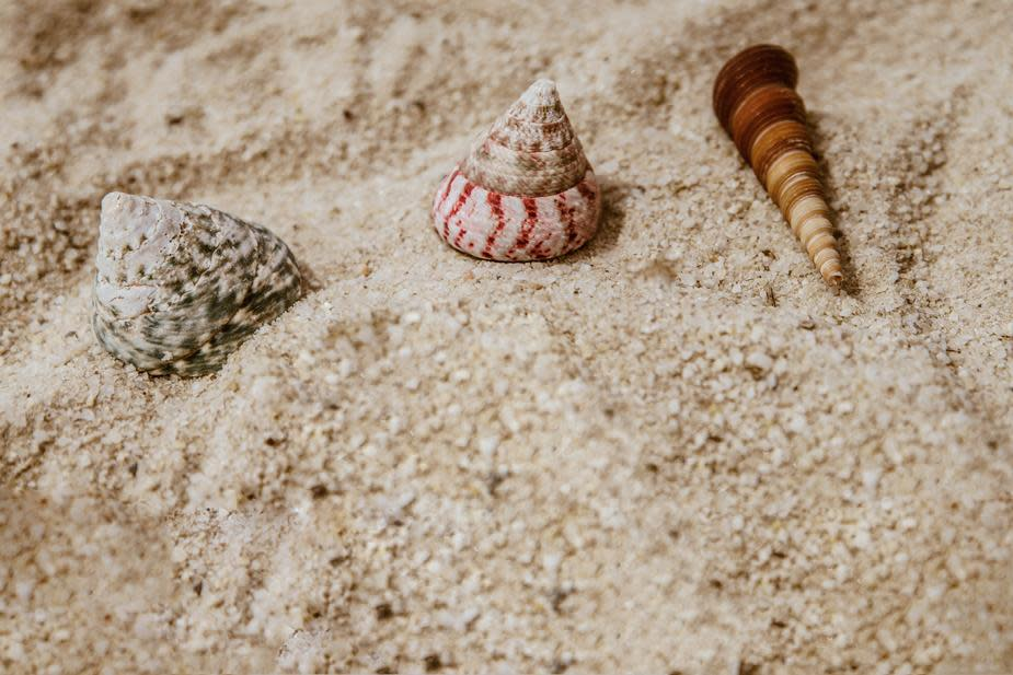 shells-in-sand