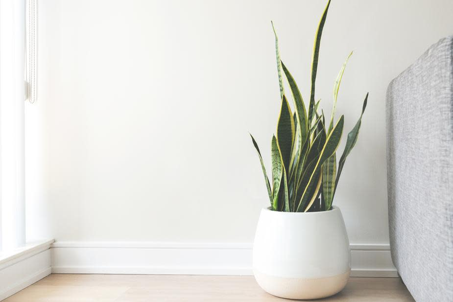 house-plant-in-white-pot 925x