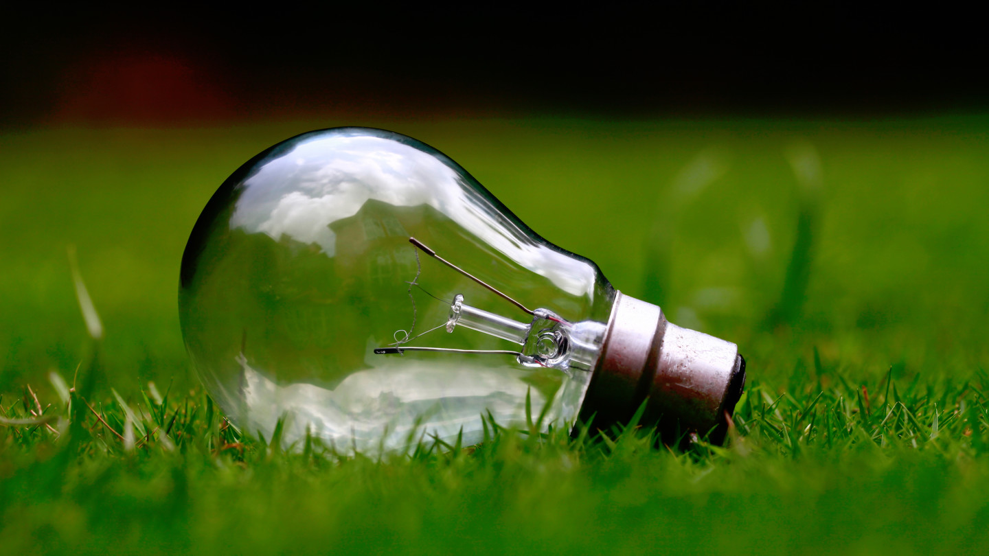 light bulb grass