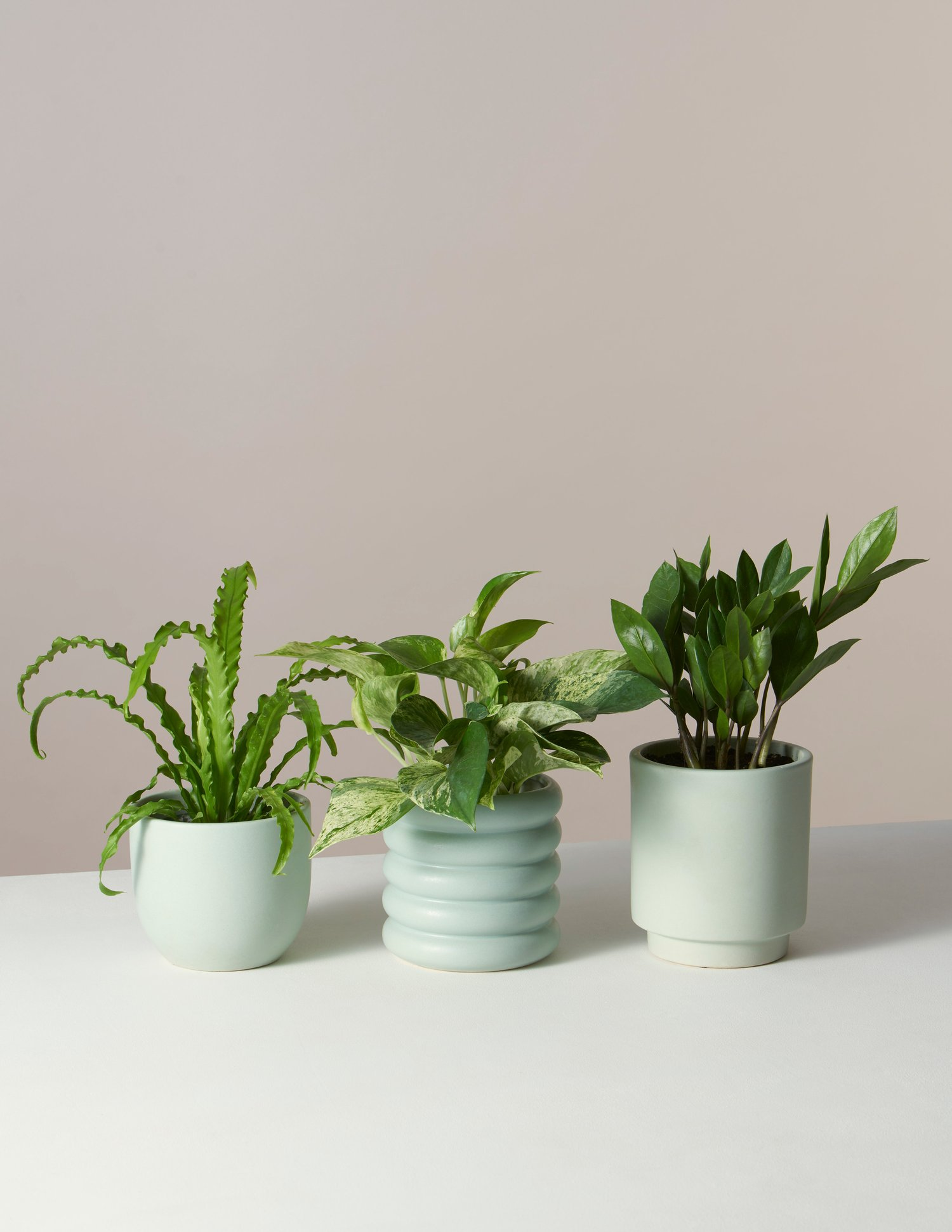 plant-subscription-box