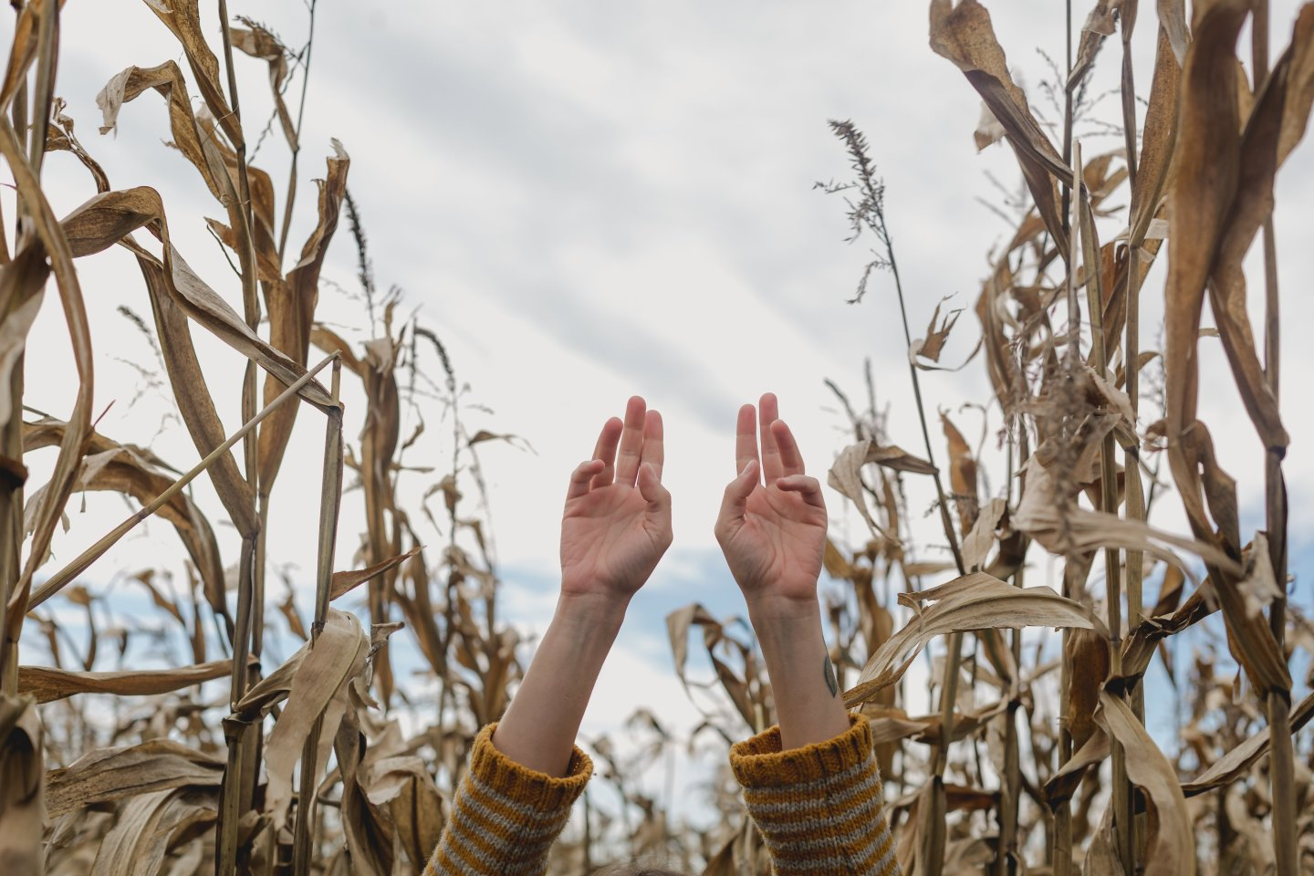 hands-reaching-up-in-cornfield