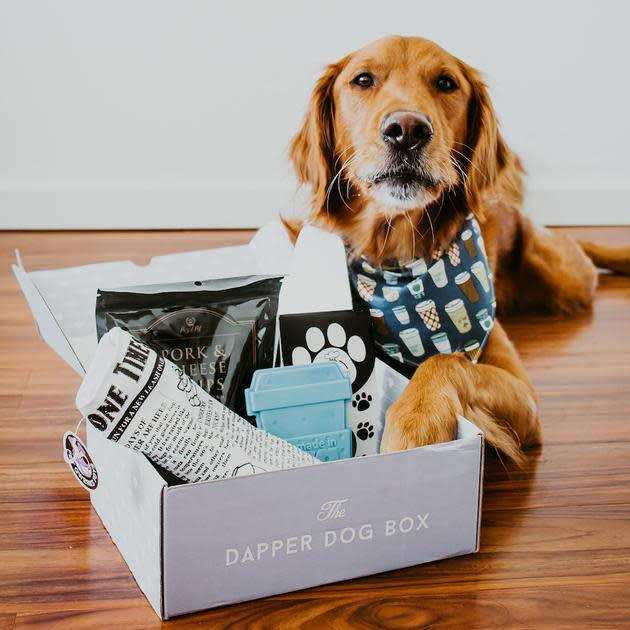 dapper-dog-box