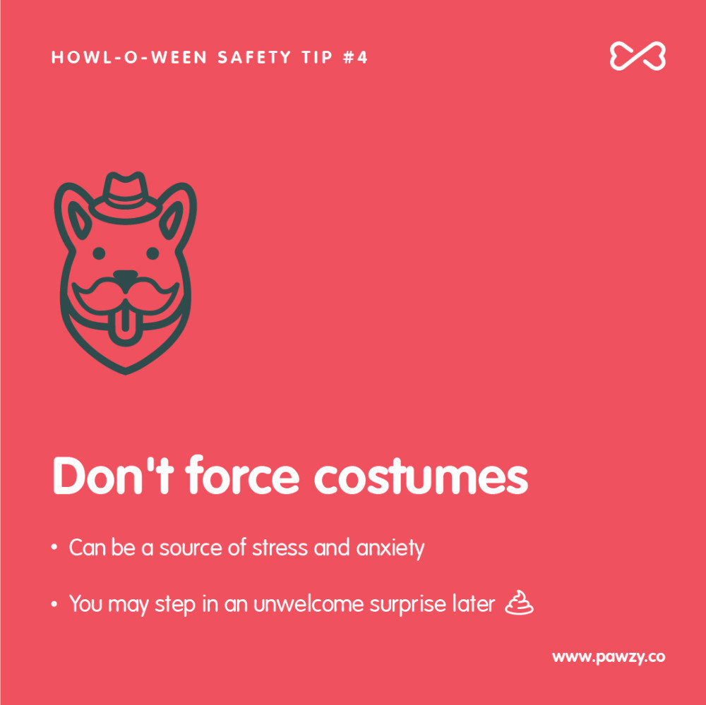 Halloween pet safety tip 4