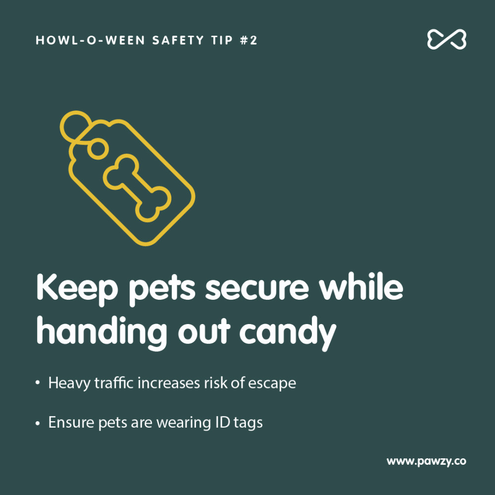 Halloween pet safety tip 2