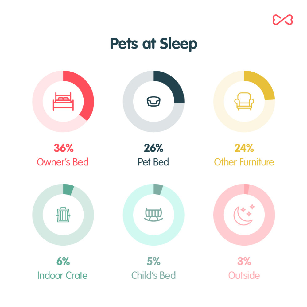 Pets at Sleep Chart