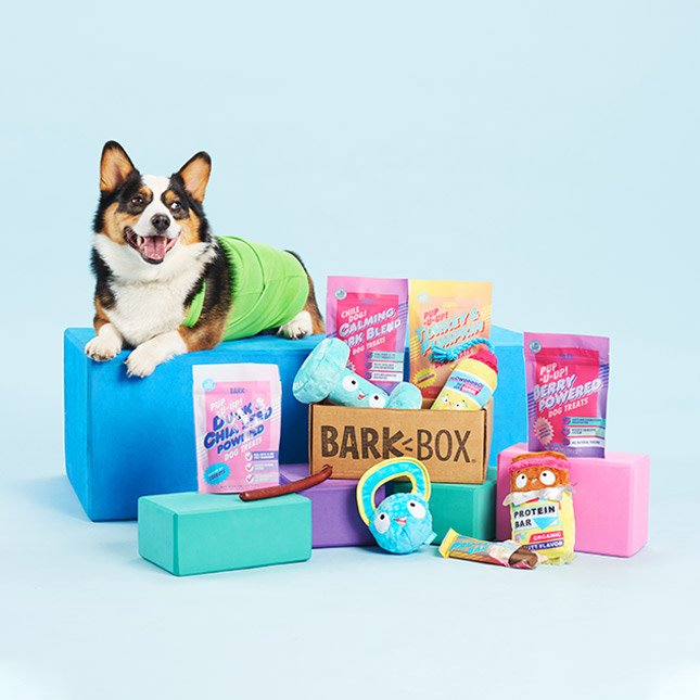 barkbox-subscription-dog