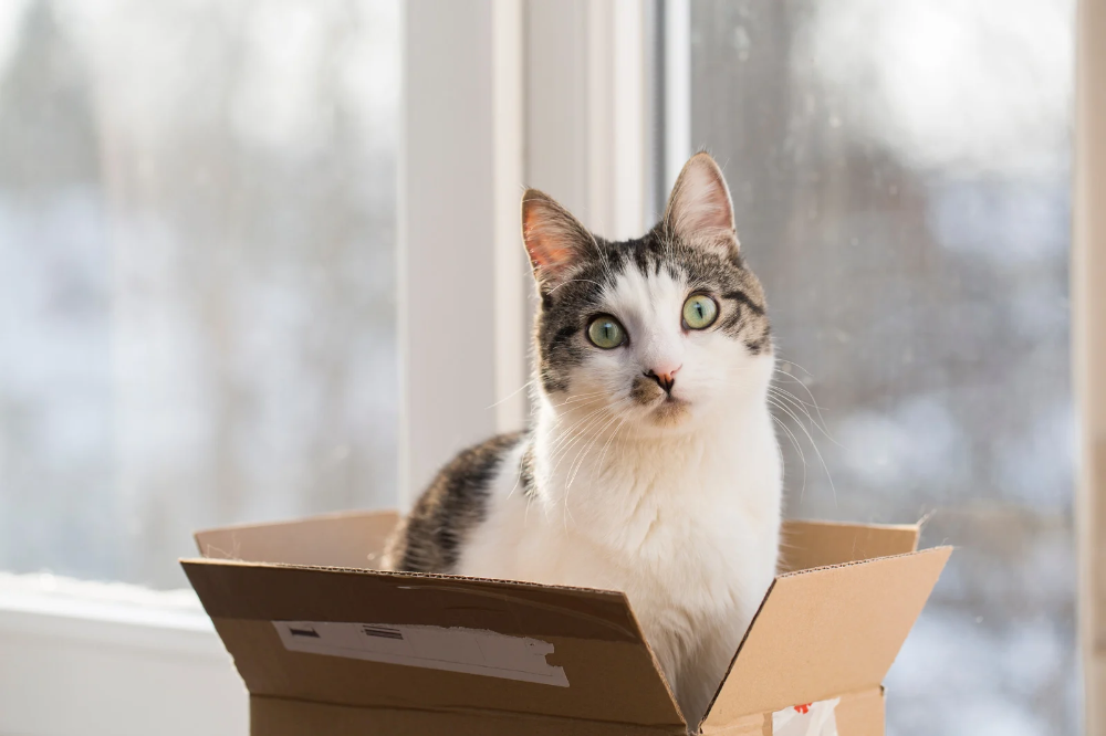 Cat subscription box Canada | Pawzy