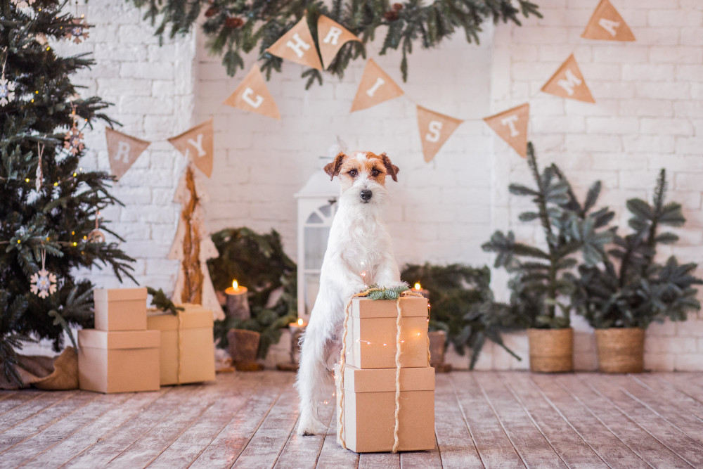 Pawzy dog gift guide
