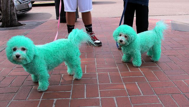 green-dogs-dyed