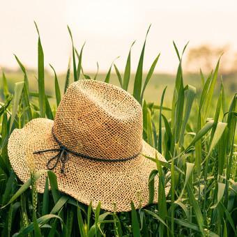 Stråhatt och gräs