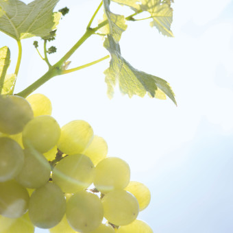 Caudalie vindruvor
