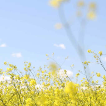Blomfält