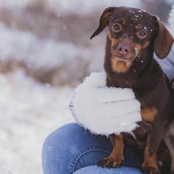 Liten hund i snöigt landskap