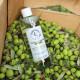 Rikedomen i olivolja