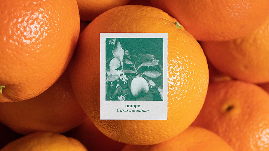 Oranges and a stamp