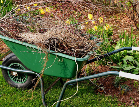 An Initial Cleanup help gets your yard in top shape. It includes garden bed cleanup, shrub pruning and leaf removal, as needed.