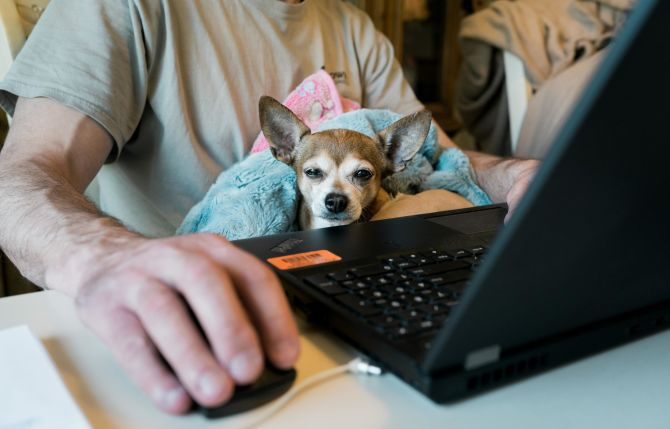What does working from home look like for Trusties globally