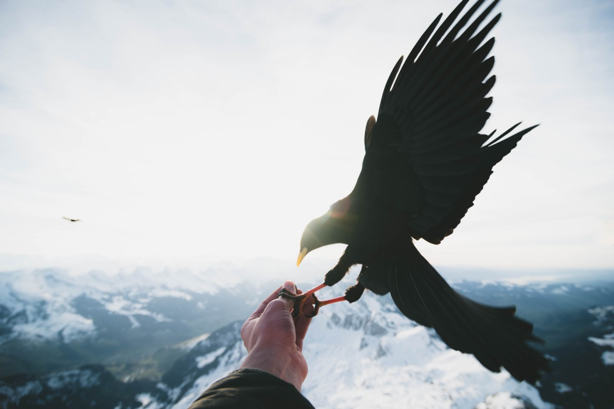 Bird landing on a hand in the mountains