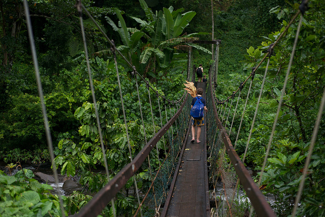 jungle-bridge