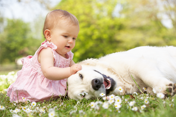 creating-a-safe-relationship-between-your-pets-and-baby