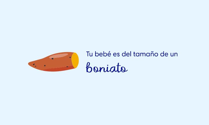 baby size of sweet potato week 18