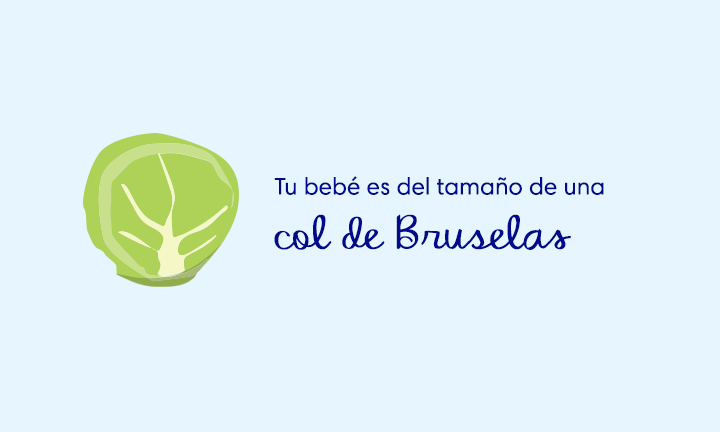 baby size of brussell sprout week 11