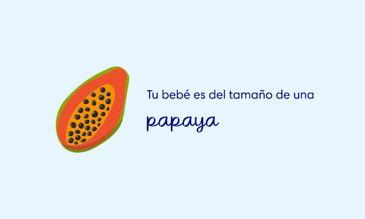 baby size of papaya week 22