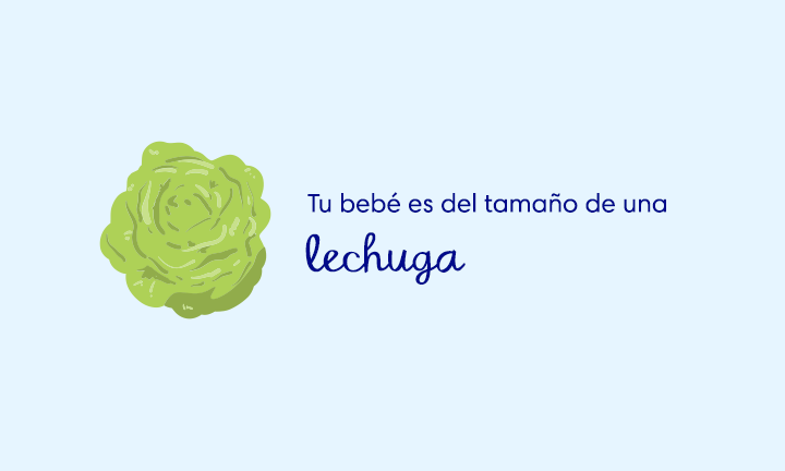 baby size of lettuce week 28