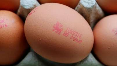 British Lion egg