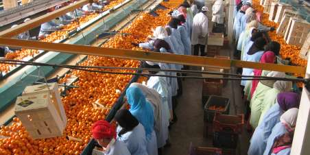 Ethical trading: hero image: citrus factory