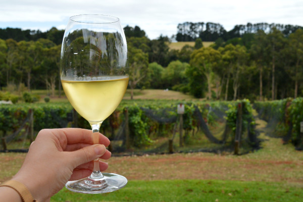 A glass of Polperro's Fumé Blanc (which had a hint of jalapeño!) © Emma Sparks