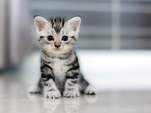 söta kattungar till salu blocket