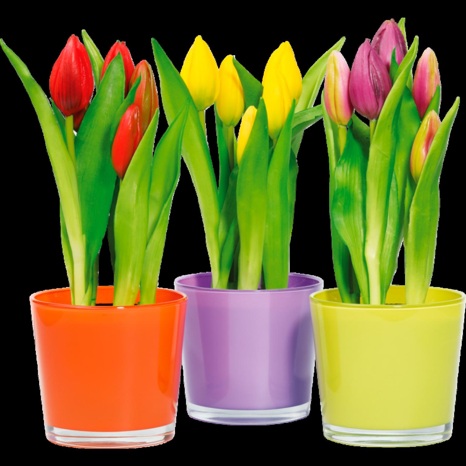 Everlasting Tulips