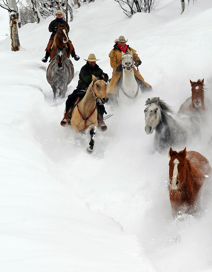Steamboat Western Horses Snow