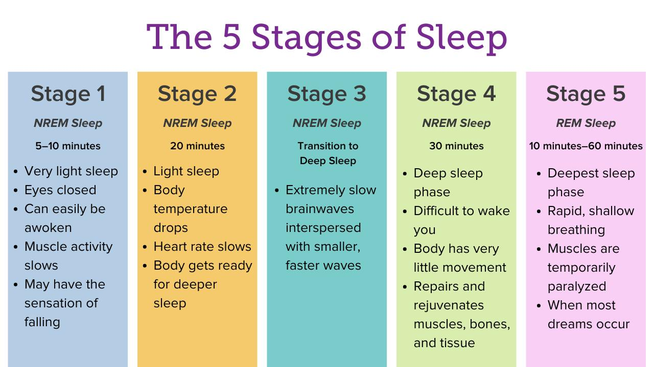 The 5 Stages of Sleep