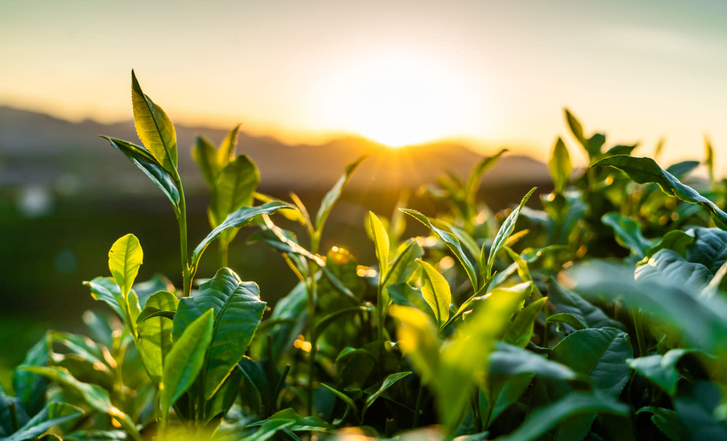 Herbs & Plants Banner