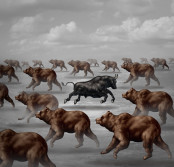 contrarian bull image