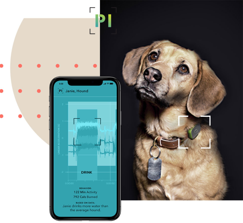 Dog next to the Pet Insight smartphone app.