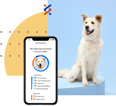 White dog sitting next to the Wisdom Panel smartphone app.