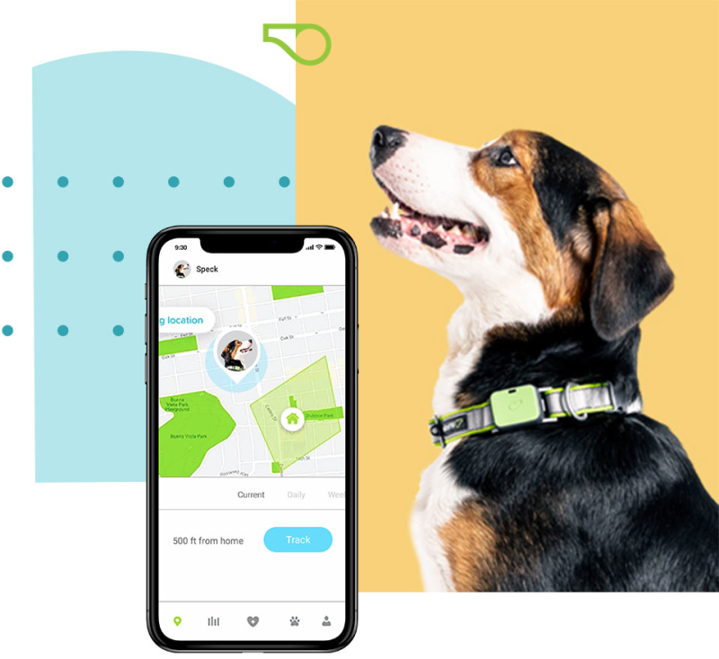 Dog sitting next to Whistle smartphone app.