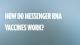 How do Messenger RNA vaccines work?