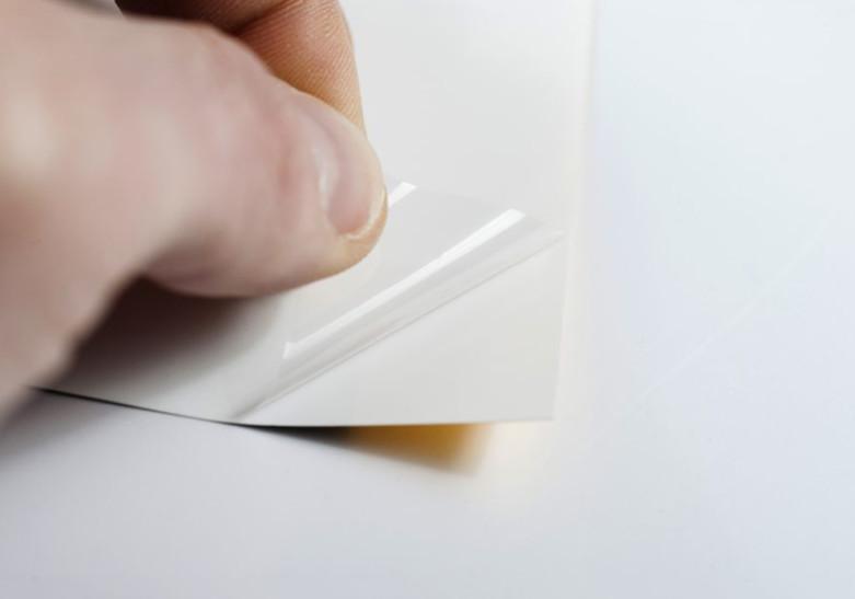 Carte Papier Gecko